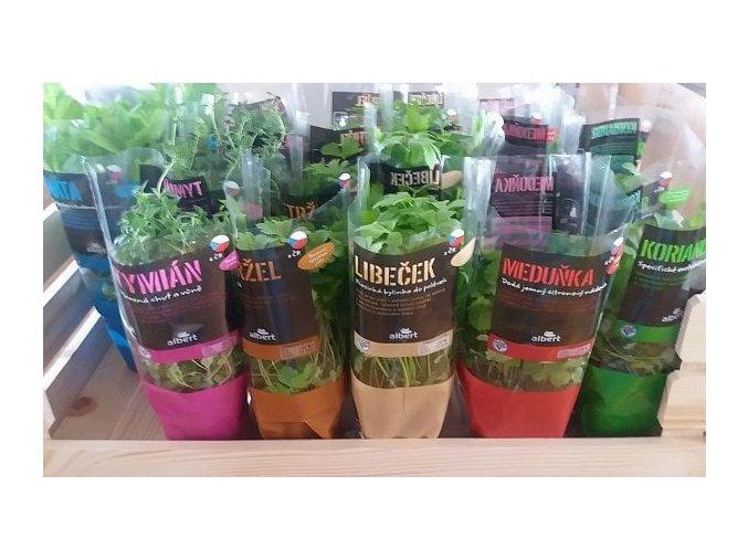 jake cerstve bylinky nabizeji na velikonoce retezce 2